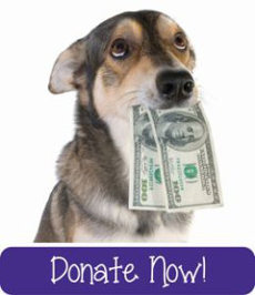 donate-dog-button-purple